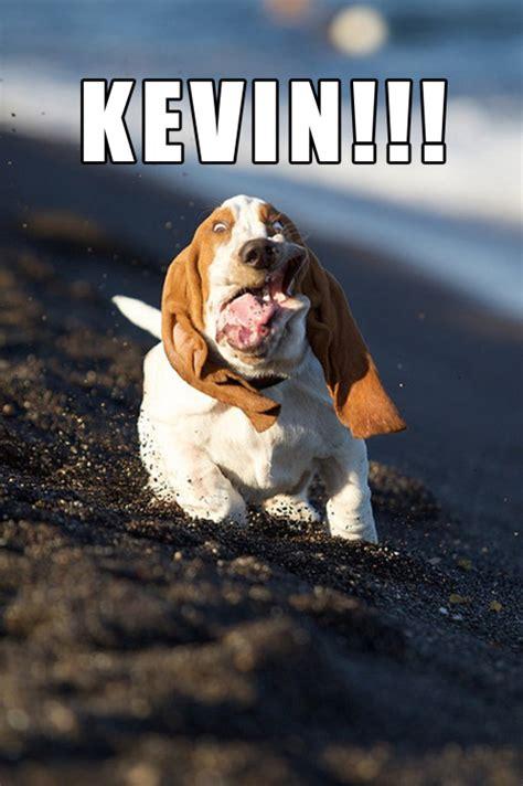 Hilarious Memes Tumblr - dog memes on tumblr