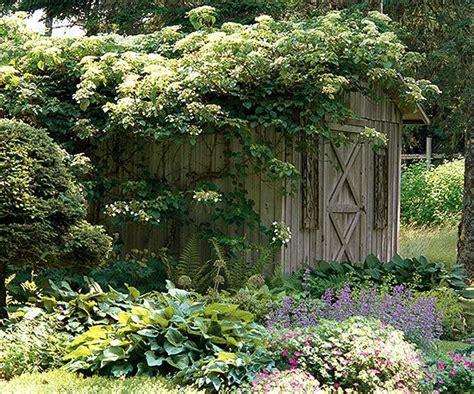 Choose The Top Hydrangeas For Your Garden  Gardens, Over