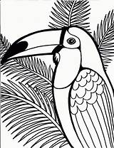 Coloring Pages Peacock Printable Printables Bird 1000 sketch template