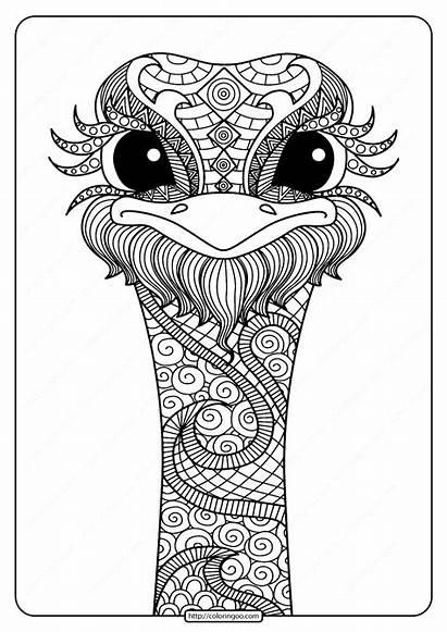 Coloring Mandala Printable Pdf Ostrich
