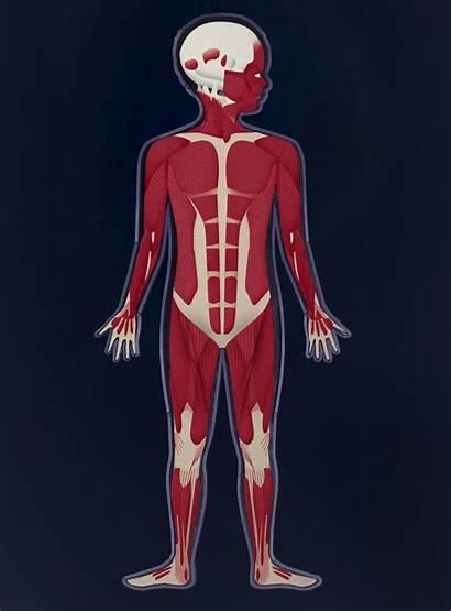 Human Muscle Skin Tinybop Making App Tones
