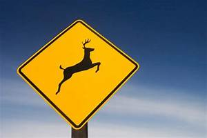 Woman's rant about deer crossing signs goes viral - NY ...