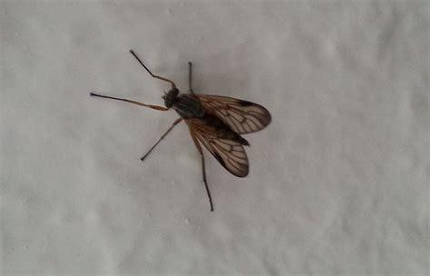 Welche Insekten Beißen by Kann Dieses Insekt Stechen Bei 223 En Insekten Bremse