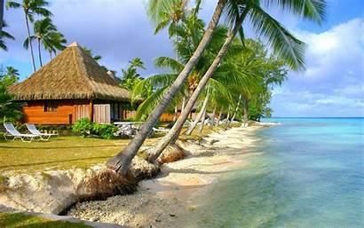 Summer Palm Tropical Beach Trees Island Landscape