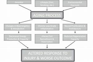 Aging And Stroke  A Schematic Diagram Of The Factors