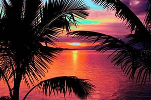 Pics For > Sunset Palm Trees Tumblr   • S u n s e t s ...