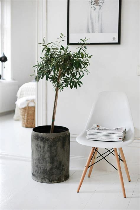 Decorate Your Home With Beautiful Houseplants That Are