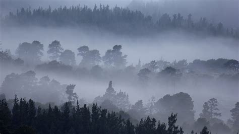 Nature mountain forest fog tree landscape hd wallpaper