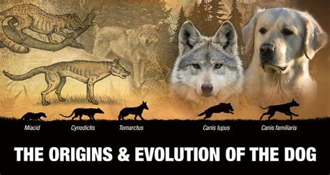 origins evolution   dog generation