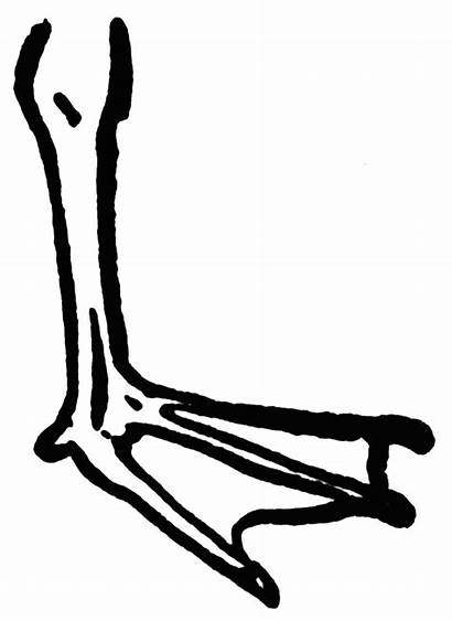 Feet Clip Clipart Foot Duck Coloring Webbed