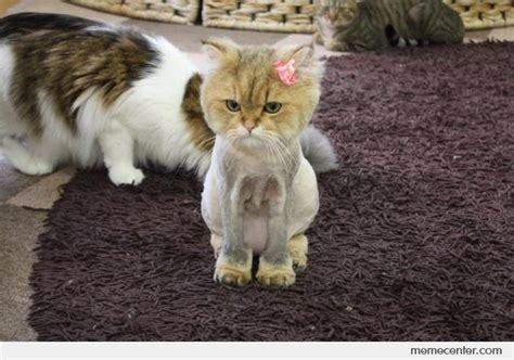 Shaved Cat Meme - shaved cat is sad by ben meme center