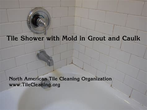 cleaning mold in shower tile and grout might need a