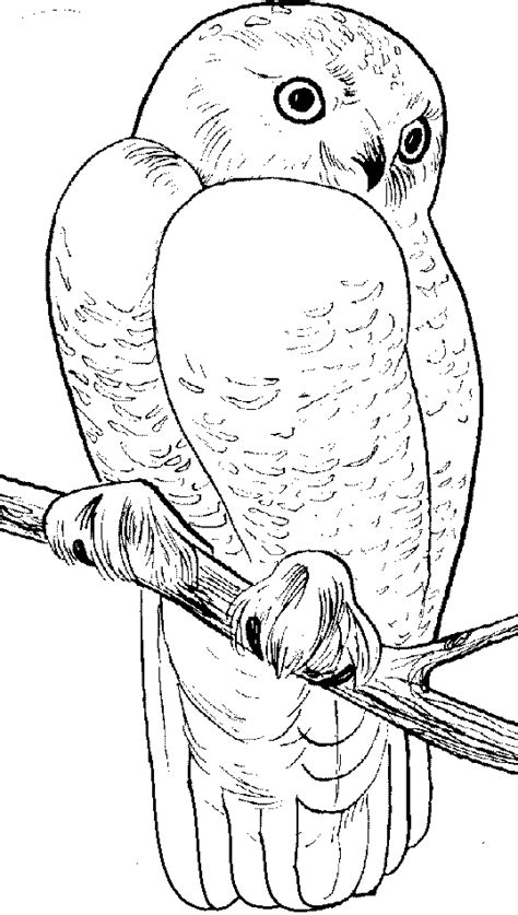 wild animals coloring pages getcoloringpagescom