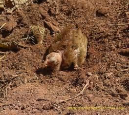 Madagascar Unique Animals