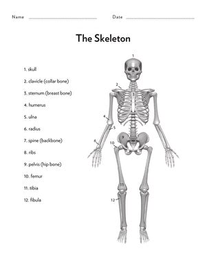 awesome anatomy bone s to worksheet education