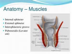 Pelvic Floor Muscles Anatomy by Anorectal Fistula