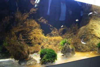 le nouvel aquarium de banyuls sur mer