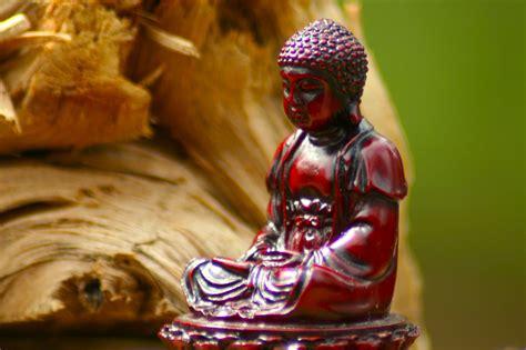 year  tiny buddha    design