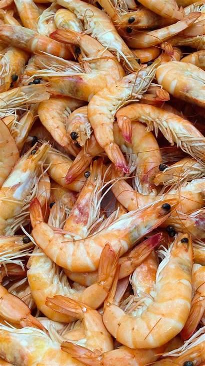 Shrimp Background Wallpapers Smartphone