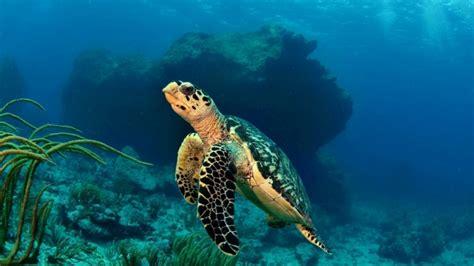 Full Hd Wallpaper Turtle Swim Tropic Underwater, Desktop