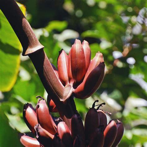 Pin auf Pflanzen aus Asien