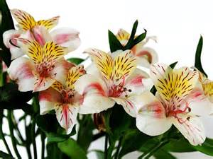 flower delivery denver flowers bouquet flowers