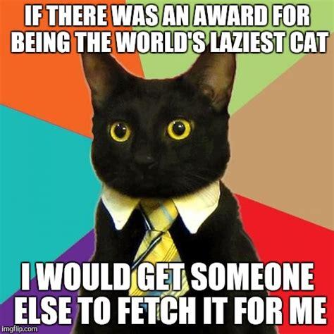 Business Cat Meme - business cat meme imgflip