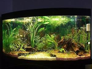 Aquarium Einrichten Beispiele : 39 faszinierende aquarium einrichtungsbeispiele und tipps deko feiern zenideen ~ Frokenaadalensverden.com Haus und Dekorationen