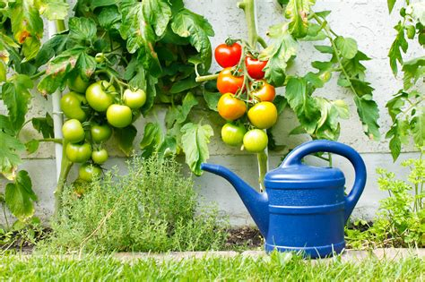 Pflanzenschutz Im Garten Umwelttipps Für Hobbygärtner