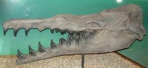 Basilosaurus   The World of Animals