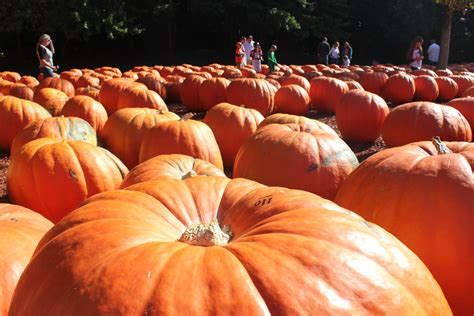 Burts Pumpkin Farm Hours burt s pumpkin farm hayes everyday