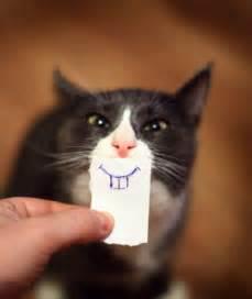 hilarious cats cats a cat compilation 2016