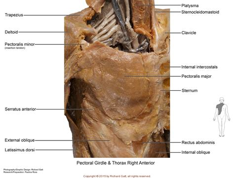 axial muscles slcc anatomy