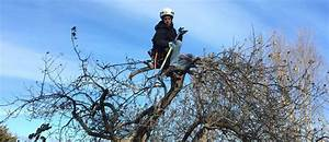 When  Why  U0026 How To Prune Fruit Trees In Ct