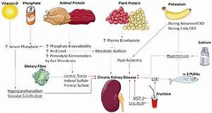 Mechanisms Of Dietary Factors Impact On Chronic Kidney Disease  N
