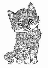 Coloring Cat Pages Adults Printable sketch template