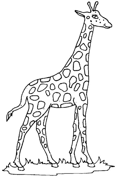 coloring giraffe picture giraffe giraffe coloring pages giraffe colors giraffe pictures