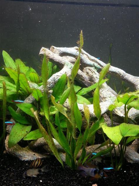 algue brun 226 tre sur plante