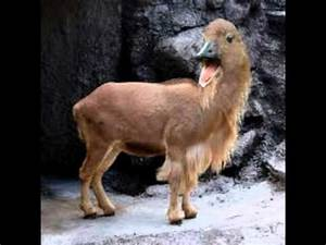 Rare exotic animals - YouTube