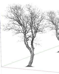 tree  sketchup  skp cad   kb bibliocad
