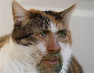 The internet never disappointing. Searched for cats with ...