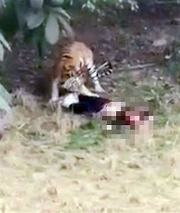Man killed in tiger attack in China
