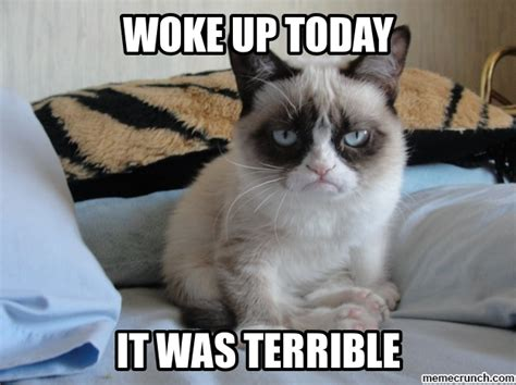 Grumpy Cat Monday Meme - grumpy cat on mondays