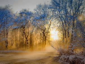 Sunrise Winter Forest