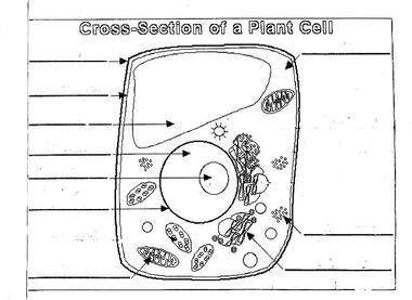 Plant Cell Diagram Worksheet  Plant Cell Diagram Unlabeled Animal Cell Diagram Unlabeled