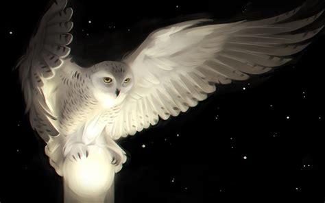wallpaper white owl artwork hd creative graphics