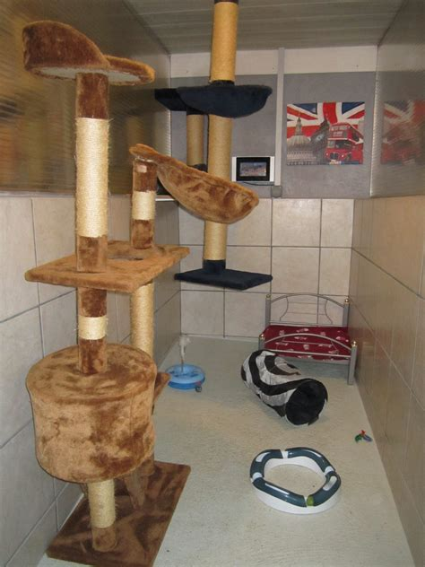 chambre angleterre stunning chambre pour chien images antoniogarcia info
