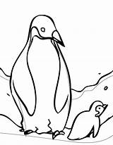 Coloring Sheets Penguin Penguins Pittsburgh Printable sketch template