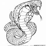 Snake Realistic Coloring Pages Drawing Cobra Snakes Step Printable Sheets Getdrawings Getcolorings Highest Template sketch template