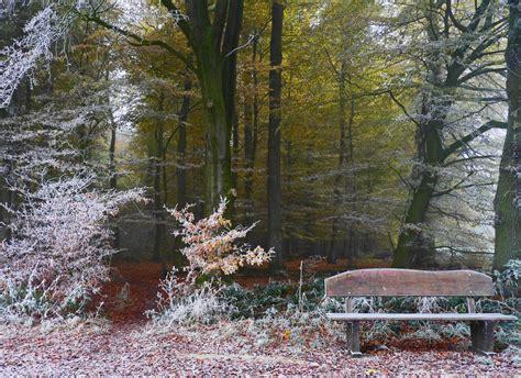 Im Herbst Und Winter by Herbst Winter Wald Foto Bild Wald Natur Herbst